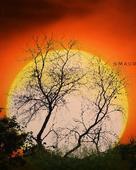 Gulshan Maurya portfolio image5