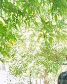 dabhi bhavesh bhupatbhai portfolio image3