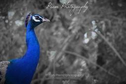 Prem Kumar portfolio image3
