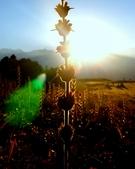 Priya Singh portfolio image5