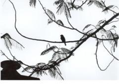 Achal kumar portfolio image1