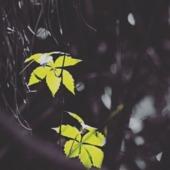 Talha Zulfiqar portfolio image6