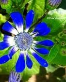 Varshaa R Thapliyal portfolio image5