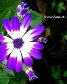 Varshaa R Thapliyal portfolio image4