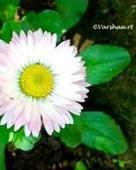 Varshaa R Thapliyal portfolio image1