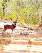 Aditya Soni portfolio image2