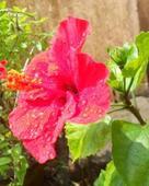 Soutam Pal portfolio image5
