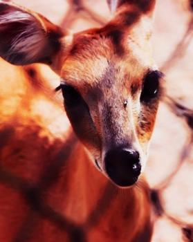 Vinit Singh portfolio image22