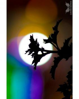 Lavish Bansal portfolio image55