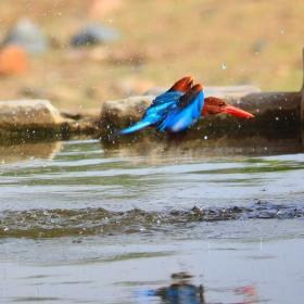 Vishank Dilip Lakhara portfolio image10