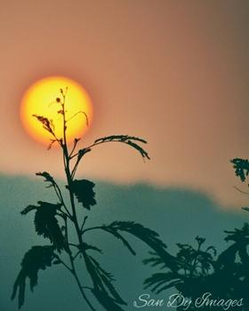 Gondesi Sandeep portfolio image29