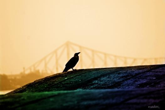 Nabin Singh portfolio image48