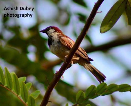 ashish dubey  portfolio image7