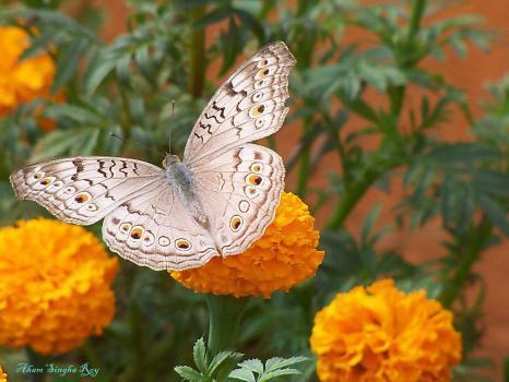 Aham Singha Roy portfolio image44