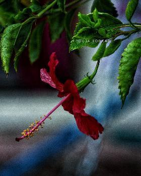 pooja portfolio image3