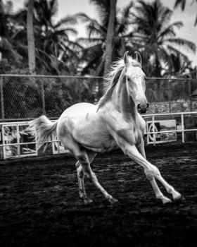 Gautam Agarwal portfolio image71