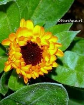 Varshaa R Thapliyal portfolio image8