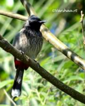 Varshaa R Thapliyal portfolio image7