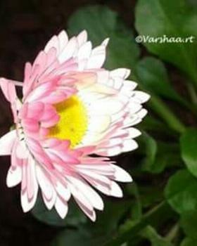 Varshaa R Thapliyal portfolio image6