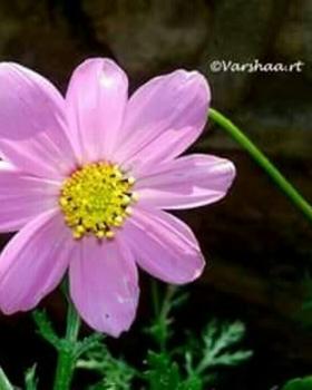 Varshaa R Thapliyal portfolio image3