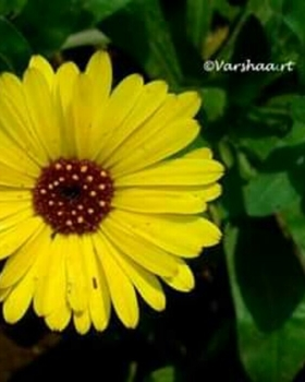 Varshaa R Thapliyal portfolio image2