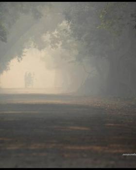 namrata choudhury portfolio image10