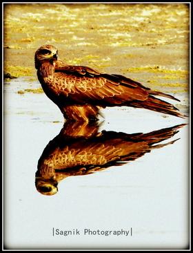 Sagnik Acharya portfolio image1