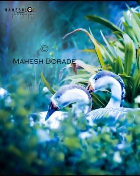 Mahesh Borade portfolio image13