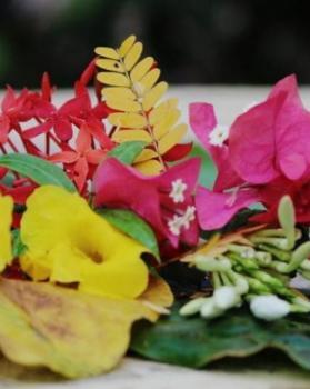 Surya portfolio image4