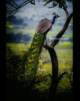 Aayush shootstar portfolio image2