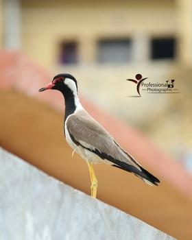 Shivam Parmesh portfolio image3