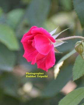 Prabhat Tripathi portfolio image12