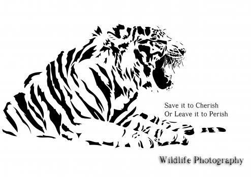 Animesh Singh portfolio image2